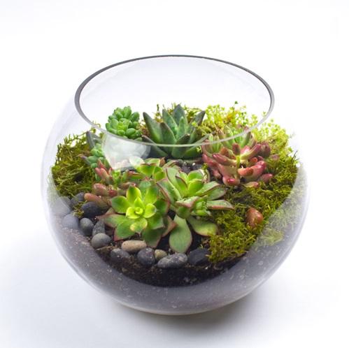 Succulent Bowl 001