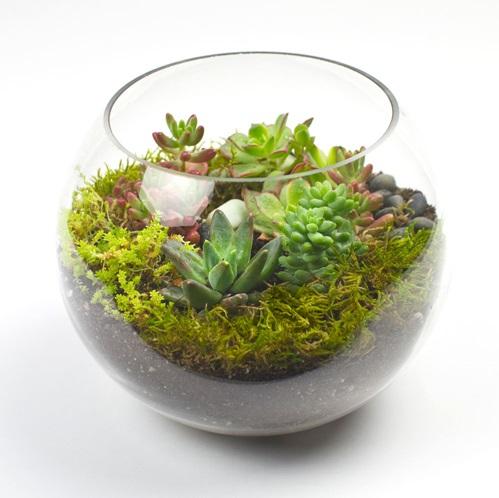 Succulent Bowl 002